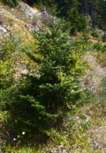 «Οι άπειρες αποχρώσεις του πράσινου» της Μαρίας Αθανασίου
