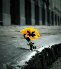 «Όλοι έχουμε την ίδια σπίθα για ζωή» του Αντώνη Χαρατσή