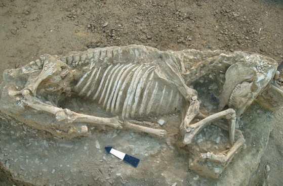 Τμήμα αρχαϊκής νεκρόπολης του 7ου και 6ου π.Χ. αιώνα αποκαλύφθηκε στον Δήμο Χίου