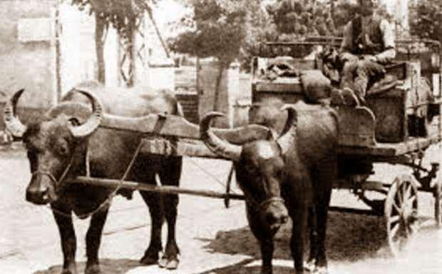 «Αγώνες με βόδια από τον Όμηρο ως τον Πόντο» της Γιώτας Ιωακειμίδου