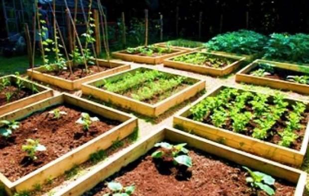 Αριστοτέλειο Πανεπιστήμιο: 150 κήποι του Πανεπιστημιακού Αγροκτήματος διαθέσιμοι σε πολίτες
