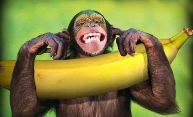 Πτυχία «Μαϊμού» – Τρεις μύθοι, μία ύποπτη απόκρυψη και μία πρόταση προς την αντιπολίτευση (!)
