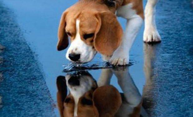 Ποτίστρες δροσιάς για τα αδέσποτα ζώα σε 34 σημεία της Αθήνας