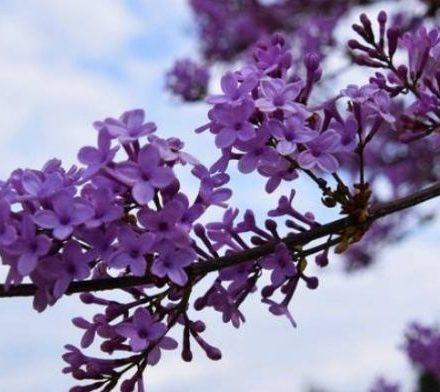 aprilios-pasxalies