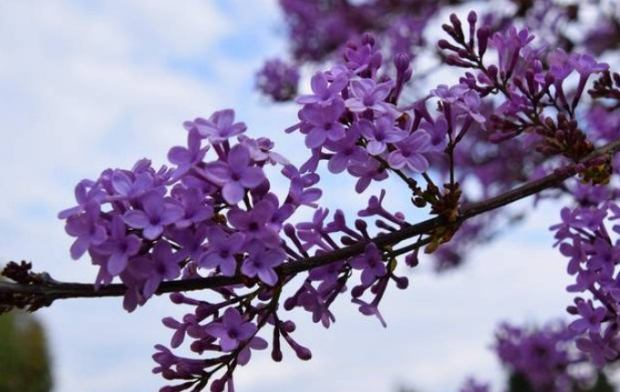 «Από πού προέρχεται η λέξη… Απρίλιος;» του Άρη Ιωαννίδη