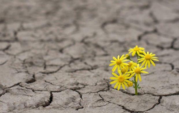 Υπομονή είναι η συγκρατημένη και γεμάτη ελπίδα αναμονή…