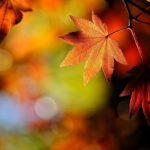 Από πού προέρχεται η λέξη Νοέμβριος;