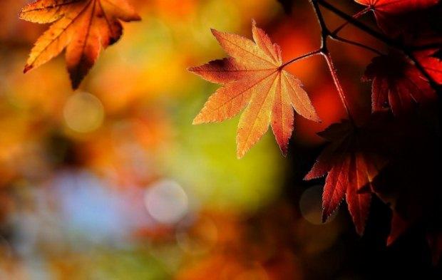 Νοέμβριος: από πού προέρχεται η λέξη;
