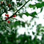 Δεκέμβριος: Από πού προέρχεται η λέξη;