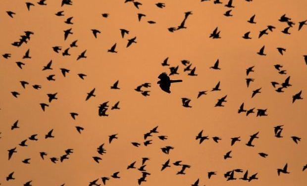 Αφιέρωμα στη μετανάστευση των πουλιών – Παγκόσμια Ημέρα Αποδημητικών Πτηνών