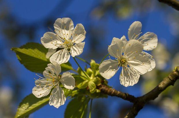 kerasia aprilios