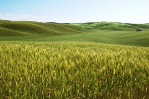 Ξεκίνησε η υποβολή αιτήσεων στη 2η πρόσκληση για τους νέους αγρότες