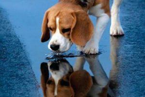Ποτίστρες για τα αδέσποτα ζώα σε 35 σημεία της Αθήνας