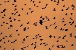 Αφιέρωμα στη μετανάστευση των πουλιών - Παγκόσμια Ημέρα Αποδημητικών Πτηνών