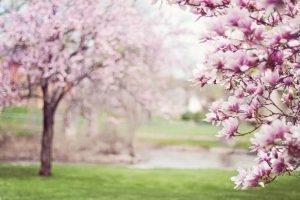 Το φαινόμενο της ισημερίας – Η εαρινή ισημερία, 20 Μαρτίου