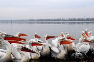 Ομαδική έκθεση φωτογραφίας για τη λίμνη Κερκίνη στη Ζώγια