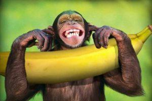 Πτυχία «Μαϊμού» - Τρεις μύθοι, μία ύποπτη απόκρυψη και μία πρόταση προς την αντιπολίτευση (!)