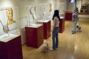 Ένα Pet-friendly Μουσείο στο κέντρο της Αθήνας