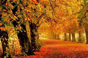 Από πού προέρχεται η λέξη… Οκτώβριος;
