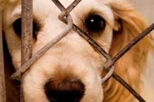 Παγκόσμια Ημέρα των Ζώων | 4 Οκτωβρίου