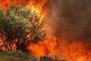 Γ.Γ. Πολιτικής Προστασίας: Εγκύκλιος για τις δασικές πυρκαγιές 2016
