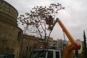 Ανακοίνωση σχετικά με την κοπή δένδρου στο χώρο του μνημείου της Ροτόντας