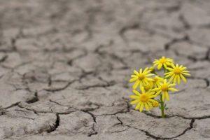 Υπομονή είναι η συγκρατημένη και γεμάτη ελπίδα αναμονή...