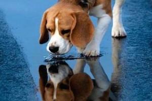 Ποτίστρες για τα αδέσποτα ζώα της Αθήνας. Πού τοποθετήθηκαν