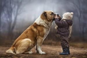 Ο Νόμος 3170, για τα ζώα συντροφιάς, τα αδέσποτα και άλλες διατάξεις